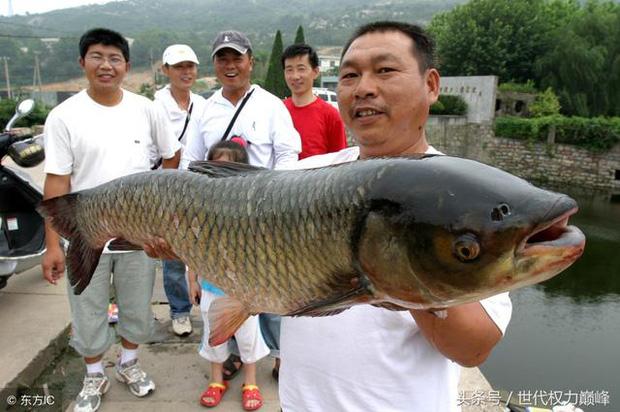 3 loại cá không những ít dinh dưỡng mà còn tồn dư nhiều độc tố, ăn nhiều chỉ thêm hại người - Ảnh 2.